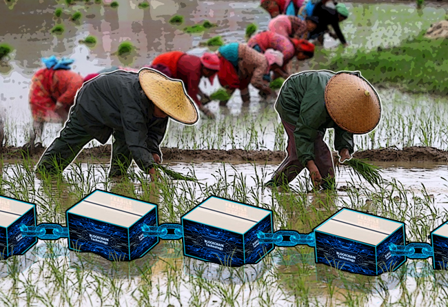 alipay-teams-up-with-chinese-government-for-rice-blockchain