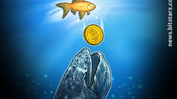 While-the-Minnows-Sell-the-Whales-HODL
