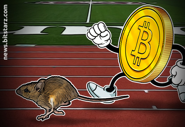 Mice-Racing-Could-be-the-Next-Big-Bitcoin-Trend